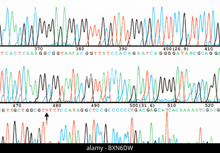 DNA sequencing. Part of a DNA base sequence read generated by an automated sequencer. - Stock Photo