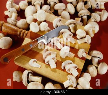 COMMON (EDIBLE) MUSHROOMS (AGARICUS CAMPESTRIS) / STUDIO - Stock Photo