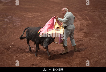 An elderly bullfighter fights a bull during a bullfight in Mexico City, September 13, 2008. - Stock Photo
