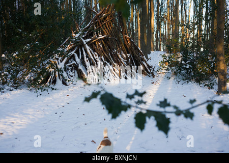 Wood pile, holly branch and disappearing pet dog in English woodland during wintry snows in north Somerset. - Stock Photo