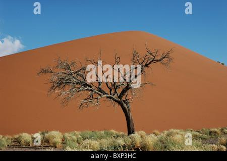 Dune 45 Sossusvlei, Namibia - Stock Photo