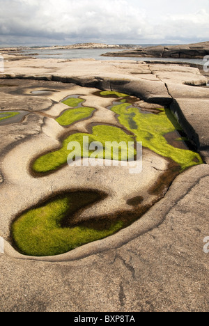 Green algae grow in puddles on a small glacially-shaped island of smooth, pink granite, west coast of Sweden - Stock Photo
