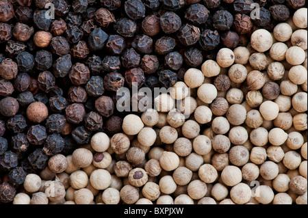 Black and white peppercorns pattern - Stock Photo
