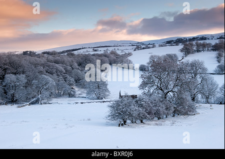 Snow laden trees in countryside near Kirkby Stephen in Upper Eden Valley. - Stock Photo