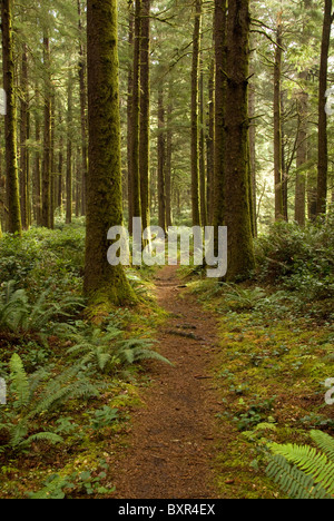 Dirt and pine needle covered path leading through forest of the Cape Perpetua Scenic Area along the central coast - Stock Photo