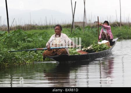 Burmese Intha Women Canoe past floating gardens on Inle Lake, Shan State, Mayanmar (Burma). - Stock Photo