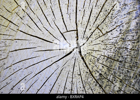 tree cut with circular rings and furrows in the trunk - Stock Photo