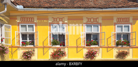 Panoramic view of a yellow wall and white windows with flowers. - Stock Photo