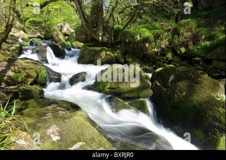 Great Britain, England, Cornwall, Bodmin Moor, Golitha Falls on the River Fowey - Stock Photo