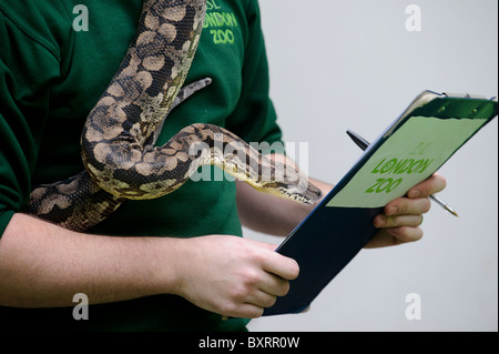 Zookeepers carryout the annual stocktake at London Zoo, Regents Park, London, 4th January 2011. - Stock Photo