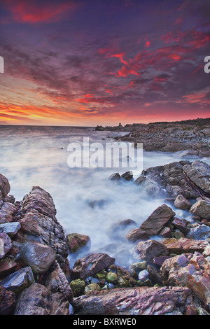 African Penguin (Spheniscus demersus) colony in background with clouds tinted in glorious sunset colours. Stock Photo