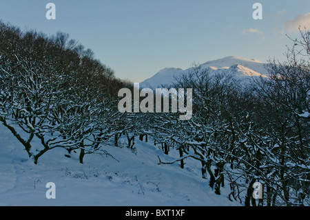 Coed Dinorwic and the Snowdon Massif in winter - Stock Photo