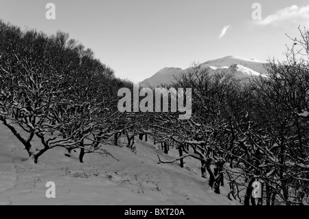 Coed Dinorwic and the Snowdon Massif in winter. Black and White - Stock Photo