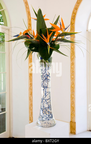 An arrangement of Bird of Paradise Flowers, Strelitzia reginae, in a clear glass vase - Stock Photo