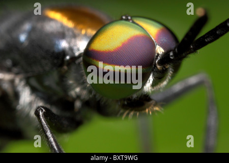 Compound eyes of a Fly at approximation - Stock Photo