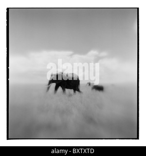 Africa, Kenya, Masai Mara Game Reserve, Blurred black and white image of Elephant herd walking through tall grass - Stock Photo