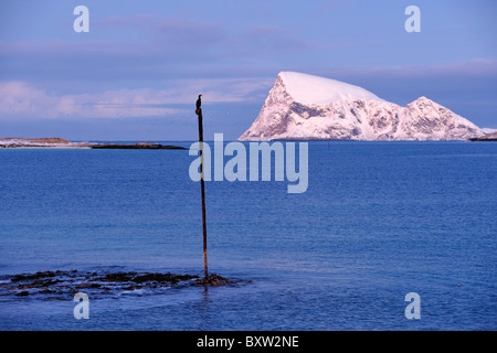 Cormorant sits on top of a pole in the dark blue sea. Polar night north of the Arctic Circle in North Norway. - Stock Photo