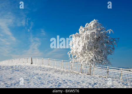 Small tree and fence covered in hoar frost and snow. - Stock Photo