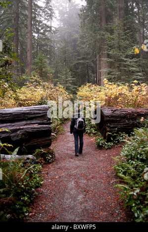 Lady Bird Johnson Grove Trail - Stock Photo