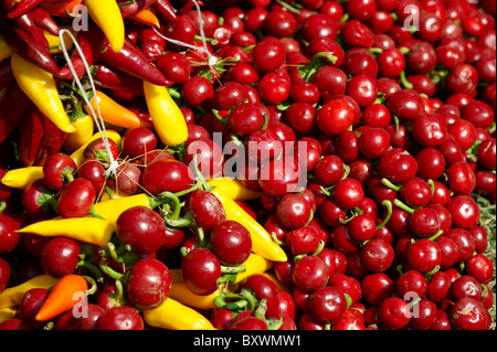 Capsicum annuum or chili peppers drying to make Hungarian paprika - Kalocsa Hungary - Stock Photo