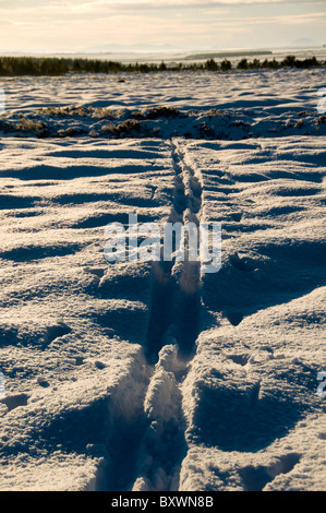 Cross country ski tracks in the forest near the village of Mey, Caithness, Scotland, UK - Stock Photo
