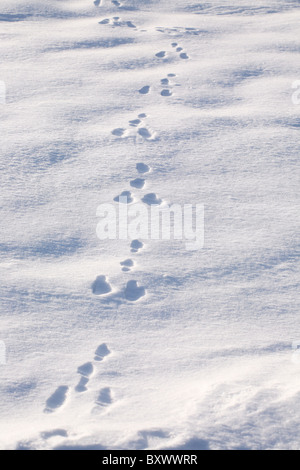 Bird or animal tracks through snow - Stock Photo