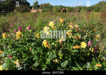 Norton Priory Museum & Gardens. Early autumnal view of the flower beds in full bloom at Norton Priory Walled Garden. - Stock Photo