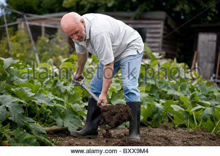 A gardener digging on an allotment - Stock Photo