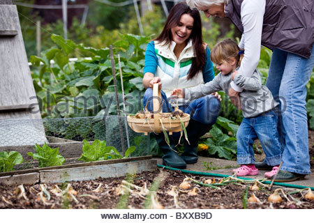 A family pulling up onions on an allotment - Stock Photo