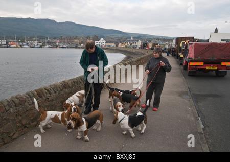 Seven basset hounds on promenade - Stock Photo