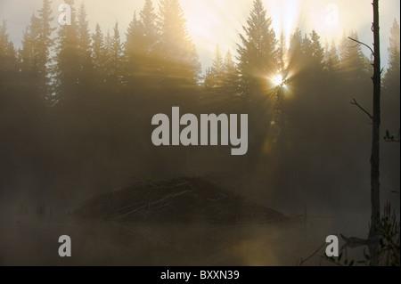 A sunrise image of the beaver lodge on a fog filled autumn morning - Stock Photo