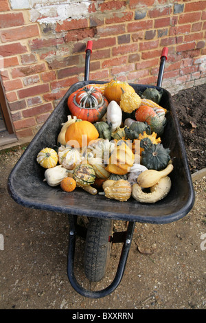 A view of vegetable gourds, squashes in a wheelbarrow in front of a brick wall. - Stock Photo