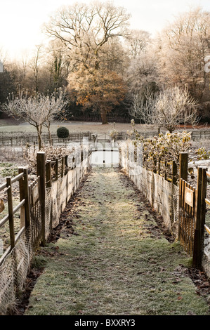 Espaliered fruit trees at Painswick Rococo Garden after a heavy frost, Gloucestershire, England, United Kingdom - Stock Photo
