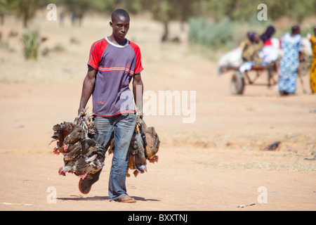 A man brings poultry to the village market of Bourro in northern Burkina Faso. - Stock Photo