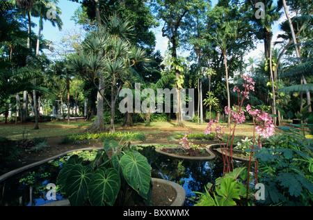 Saint denis reunion island france 30 dicember 2002 people stock photo royalty free image - Table jardin hexagonale saint denis ...
