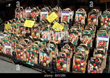 Tulip bulbs for sale in the Bloemenmarkt, flower market in Amsterdam, Holland - Stock Photo