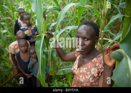 Ruthie Silondi (40) in her corn field with her family- Webuye District, Western Kenya. - Stock Photo