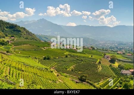 Venosta Valley vineyards Trentino Alto Adige South Tyrol Merano Italy - Stock Photo