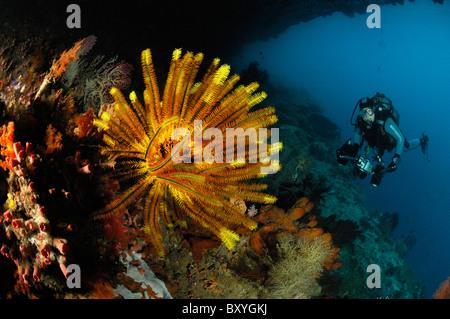 Scuba Diver at Coral Reef, Raja Ampat, West Papua, Indonesia - Stock Photo
