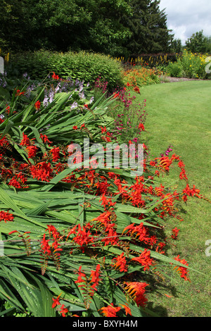 Walton Hall and Gardens. Summer view of montbretia in full bloom at Walton Hall Gardens. - Stock Photo