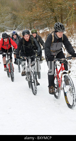 A group of cyclists wearing helmets cycling up a hill in the snow on Cannock Chase on Boxing Day - Stock Photo