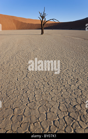 Dead trees in dried clay pan, Namib Naukluft National Park, Namibia - Stock Photo