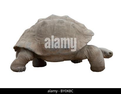 Galapagos tortoise, Galapagos, tortoise, slow - Stock Photo