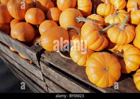 pumpkins for sale - Stock Photo