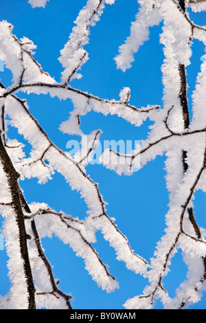 Snow covered twigs and blue sky. - Stock Photo