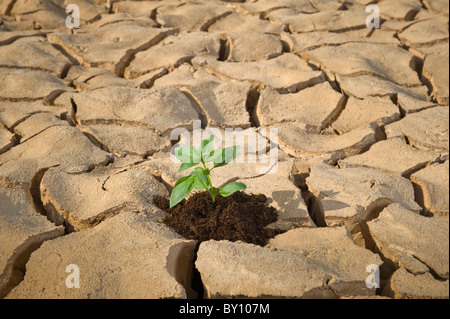 small plant in a cracked soil - Stock Photo