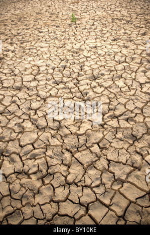 little small plant in a cracked soil - Stock Photo