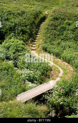 Wooden plank bridge and steps on the South West Coast Path near Hartland Quay in Devon - Stock Photo