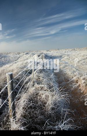 Hoar frost - Stock Photo