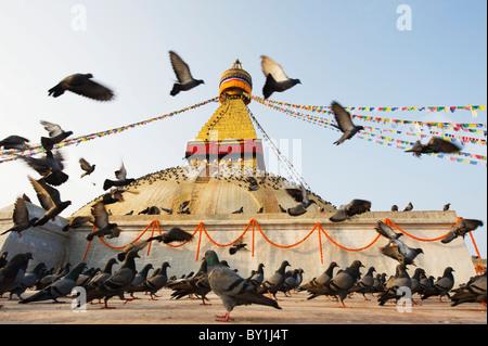 Asia, Nepal, Kathmandu, Kathmandu Valley, Boudhanath, Boudha Stupa, (Chorten Chempo), pigeons - Stock Photo